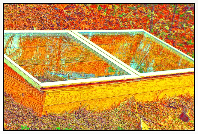 cold frame web